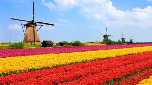 netherlands-tulip-fields.jpg.adapt.945.1_0Fd9EFO